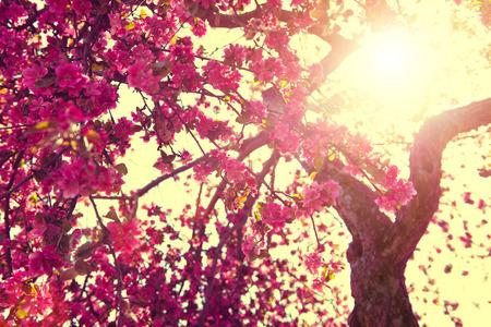 春の自然の背景。晴れた空に咲く木