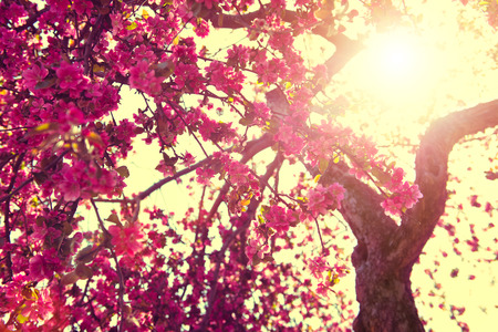 Spring nature background. Blooming tree over sunny sky