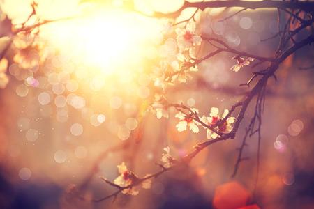 Vårblommar bakgrund. Vacker scen med blommande träd Stockfoto