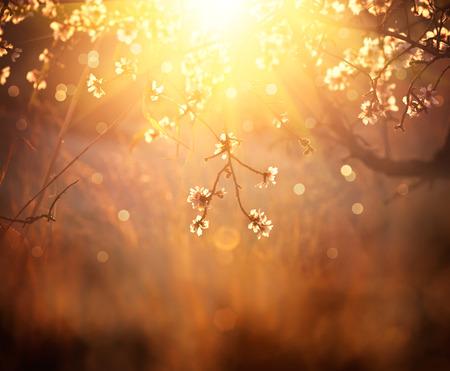 春の花の背景。咲く木の美しい景色