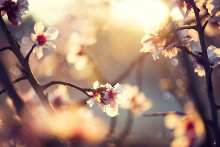 focus on: Beautiful nature scene with blooming tree and sun flare