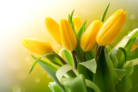 Yellow tulips bouquet over nature green blurred photo