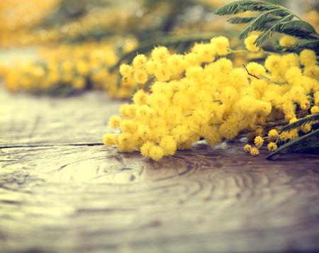 나무 테이블에 미모사 봄 꽃
