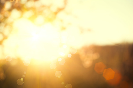 Schöne Natur-Szene mit blühenden Baum und Sonne Flare