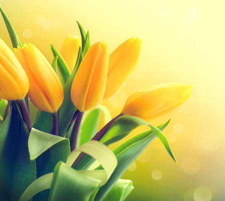Yellow tulips bouquet over nature green blurred background photo