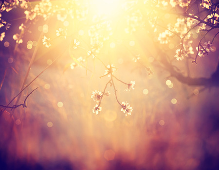 Beautiful nature scene with blooming tree and sun flare photo