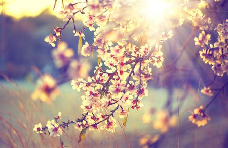 landschap: Prachtige natuur scène met bloeiende boom en zon flare