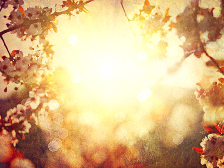 blossoming yellow flower tree: Spring blossom blurred background. Vintage styled, sepia toned