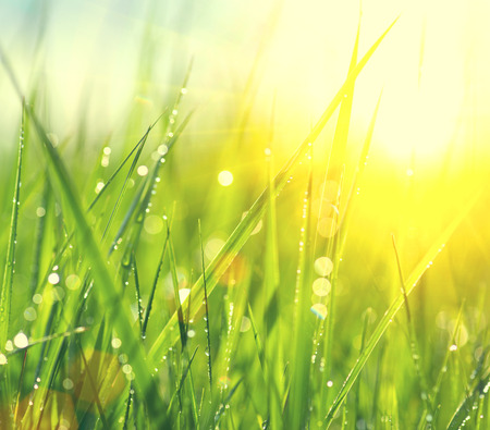 Grass. Fresh green spring grass with dew drops closeup Фото со стока - 37941500