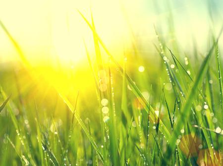 건강: 잔디. 이슬 신선한 녹색 봄 잔디 근접 촬영 방울