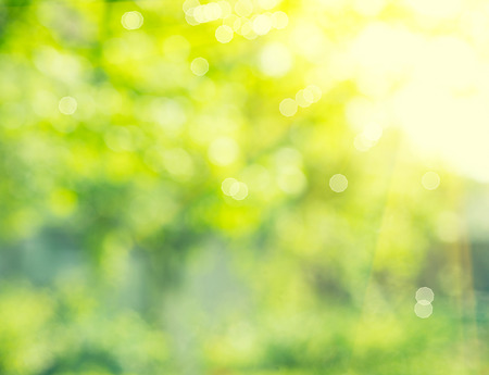 自然の背景。抽象的なぼやけた夏緑ボケ 写真素材