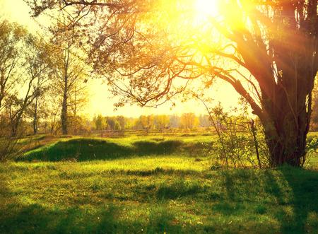Paisaje de la naturaleza. Puesta del sol escena