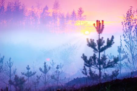 Sch�ne Natur Sonnenaufgang Nebel Landschaft. Misty forest