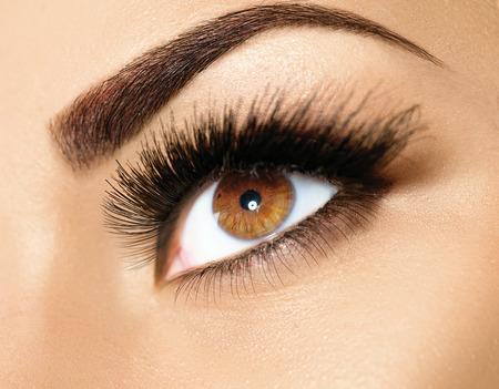 ojo humano: Maquillaje de ojos Brown. Cejas belleza perfecta Foto de archivo