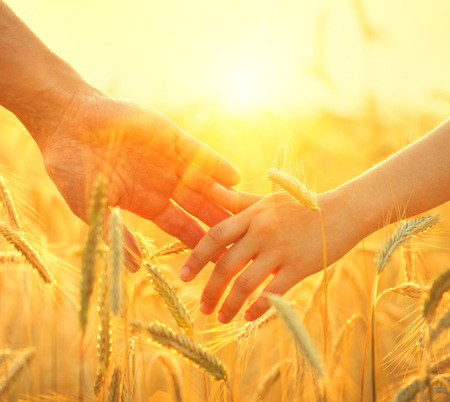 Couple taking hands and walking on golden wheat field over beautiful sunset