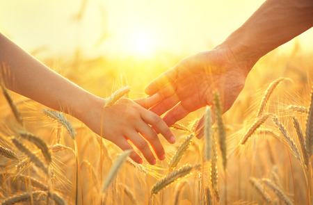 manos juntas: Joven de tomar la mano y caminar en campo de trigo de oro sobre hermosa puesta de sol