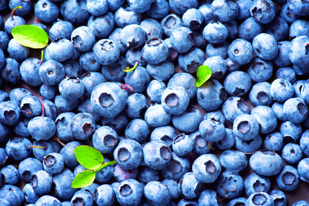 Blueberry achtergrond. Rijp en sappige vers geplukte bosbessen close-up