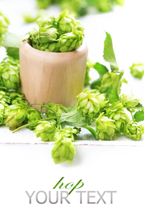 hop hops: Green hop in wooden bowl over white background. Fresh whole hops close up isolated on white table. Ingredients for beer. Brewery concept. Alternative medicine. Space for your text. Vertical image