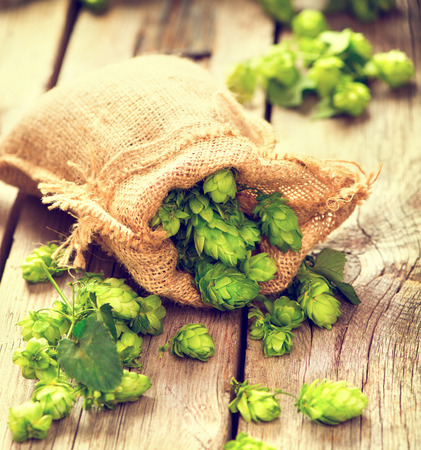 hop cone: Whole hops in bag on wooden cracked old table. Brewery. Beer ingredients. Beauty fresh-picked hop cones closeup. Sack of hops on vintage background.  Retro style. Alternative medicine.