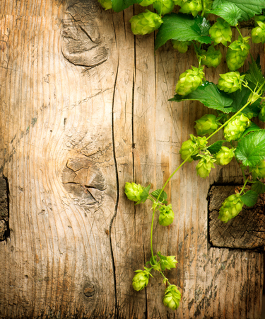 humulus: Hop twig over wooden cracked table background border. Vintage toned. Beer production ingredient. Brewery. Beautiful fresh-picked whole hops border design close-up. Brewing concept surface. Vertical image.