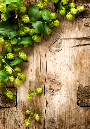 picked: Hop twigs over wooden cracked table background. Vintage toned. Beer ingredients. Beautiful fresh-picked whole hops with green leaves border design close-up. Brewing concept surface. Vertical image Stock Photo