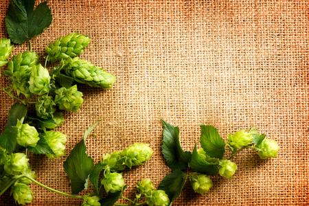 黄麻布の新鮮なホップをクローズ アップ。グリーン ホップ サック リネン テクスチャ上の葉でコーン。黄麻布の背景。ビール醸造のコンセプトです 写真素材