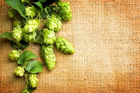 ホップの葉と円錐枝の黄麻布の背景の上。ホップのクローズ アップ。ホップの花序。ビール醸造のコンセプトです。ビール醸造所。ぼろぼろ袋リネ