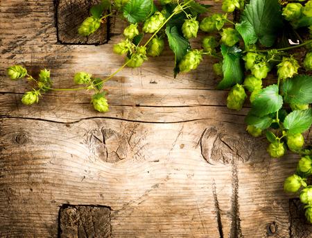 Hop roślin granicy projektu. Gałązki chmielu nad drewnianym stole pęknięty tle. Składniki na piwo. Uroda świeże całe chmielu bliska. Piwowarski koncepcji powierzchni. Browar