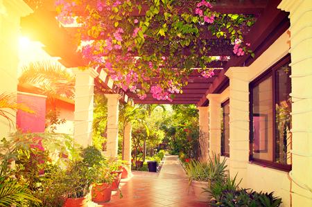puesta de sol: Terraza ajardinada hermosa del vintage de una casa con flores