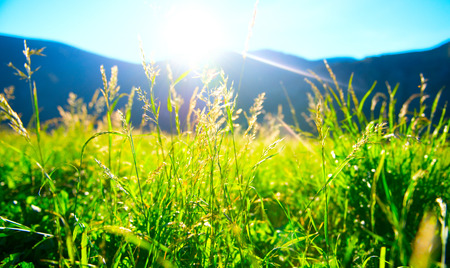 sunshine: Beautiful nature landscape - alpine meadow Stock Photo