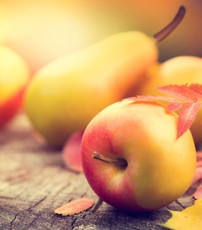 beautiful thanksgiving: Thanksgiving background. Autumn background with colorful leaves, apples and pears