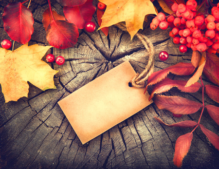 Autumn background with blank greeting card and colourful leaves over wood