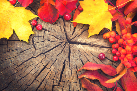 Autumn background with colourful leaves over wood Stockfoto