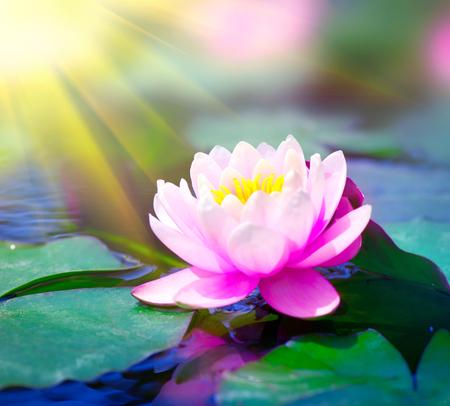 Waterlelie close-up in een vijver. lotusbloem Stockfoto