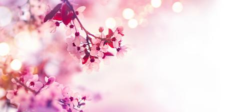 ピンクの花の木と春の花ボーダー 写真素材