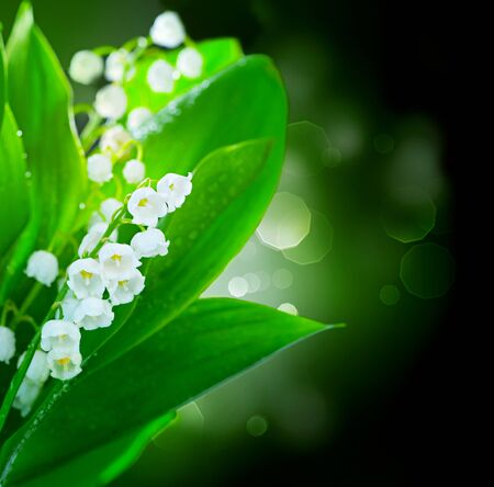 Lily-of-the-valley flowers border design Stock Photo