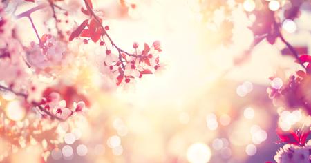 iluminado a contraluz: Escena hermosa naturaleza de la primavera con el árbol en flor rosa Foto de archivo