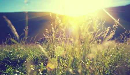 Piękny krajobraz przyrody - Alpine łąka