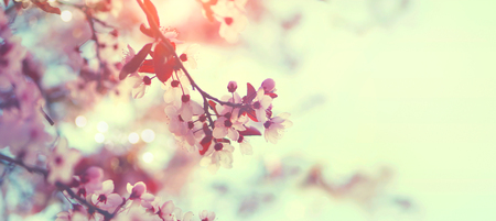 ピンクの花の木と春の自然景色 写真素材