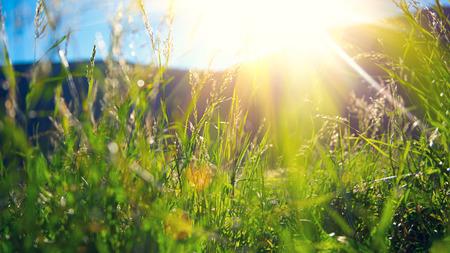Schöne Natur, Landschaft - Alpine Wiese