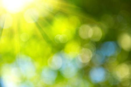 아름다운 자연 배경을 흐리게. 녹색 나뭇잎