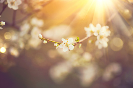 Beautiful spring nature scene with blooming tree Imagens - 54180815