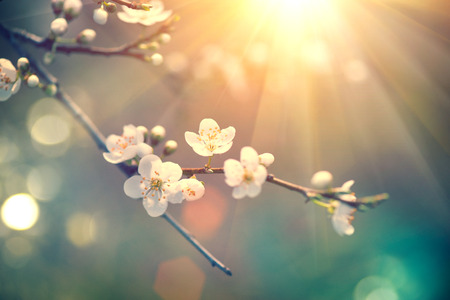 Beautiful spring nature scene with blooming tree