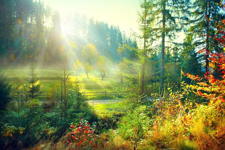 아름 다운 아침 안개 낀 오래 된 숲과 시골에서 초원. 가을 자연 장면 스톡 콘텐츠