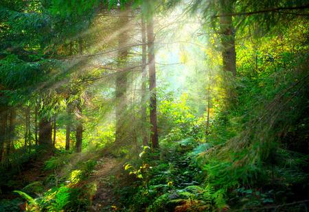 Park. Beautiful misty old forest Standard-Bild