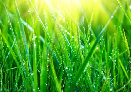 Tráva. Čerstvé zelené trávy s kapkami rosy detailní. Abstraktní pozadí přírody