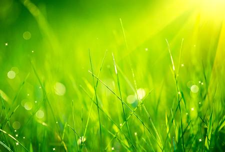草。新鮮な緑の春の草露滴クローズ アップと