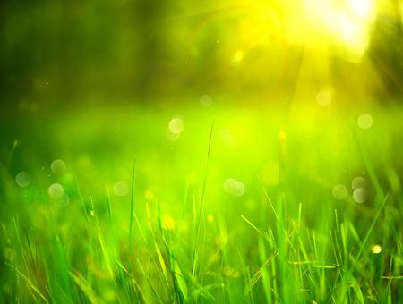 自然には、背景がぼやけています。太陽フレアを背景に春の公園で草を緑