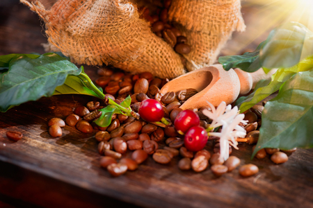 Coffee beans, flowers and berries on wooden table closeup
