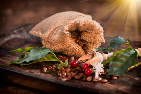bush bean: Coffee beans, flowers and berries on wooden table closeup
